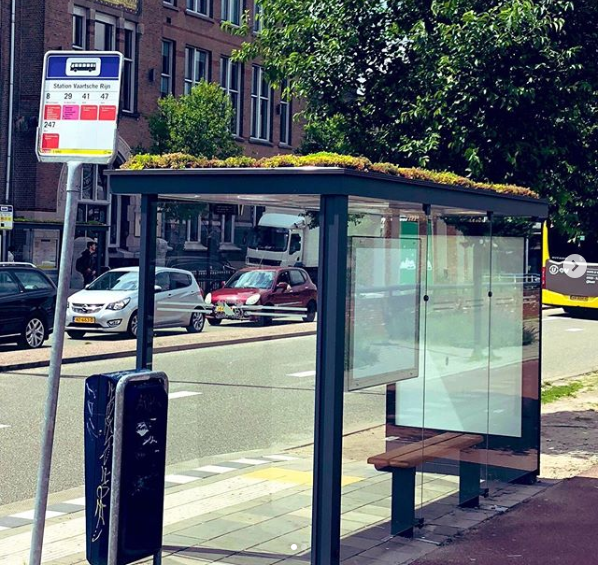 16 Dutch Bus Stops Are Getting Green Roofs Covered in Plants as a Gift For Honeybees